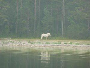 Tamissari-Helmingsholm 071